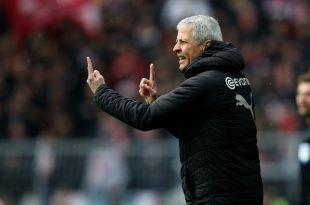 Bleicht nächste Saison Trainer des BVB: Lucien Favre